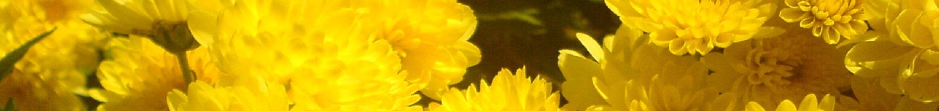 bloemen versturen naar  chrysanten