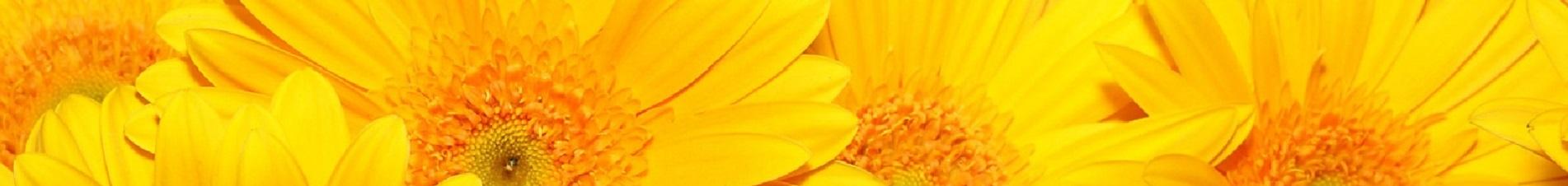 bloemen versturen naar  geel