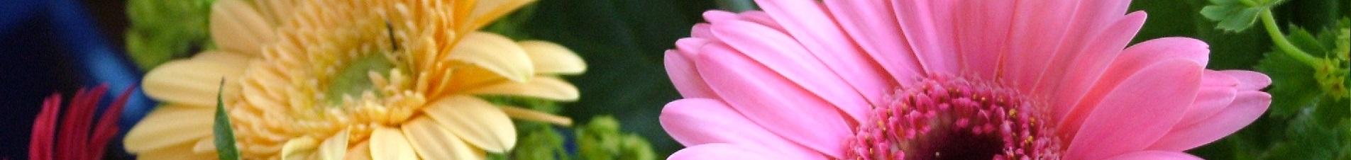 bloemen versturen naar  gerbera's