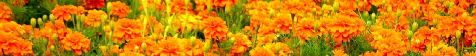 bloemen versturen naar  oranje