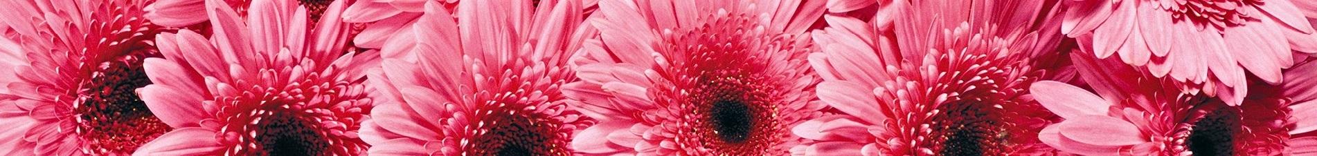 bloemen versturen naar  roze