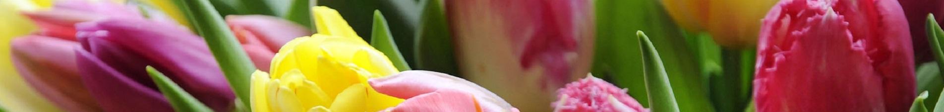 bloemen versturen naar  tulpen